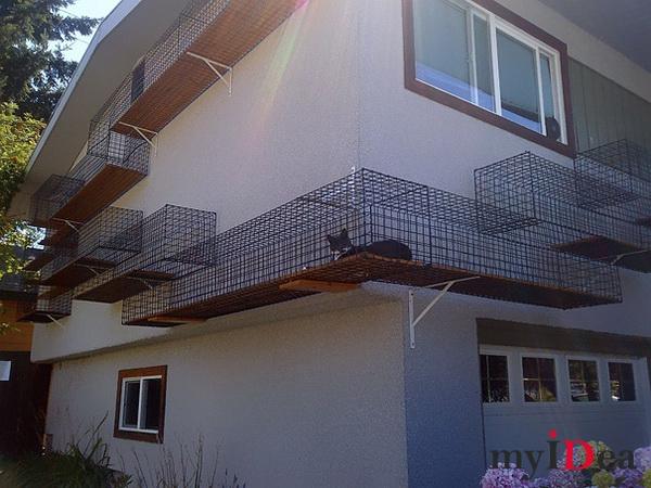 Дом мечты: Кошачий подиум для прогулок вокруг дома
